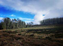 ALT - tereny leśne w okolicach wzgórza Gontyniec